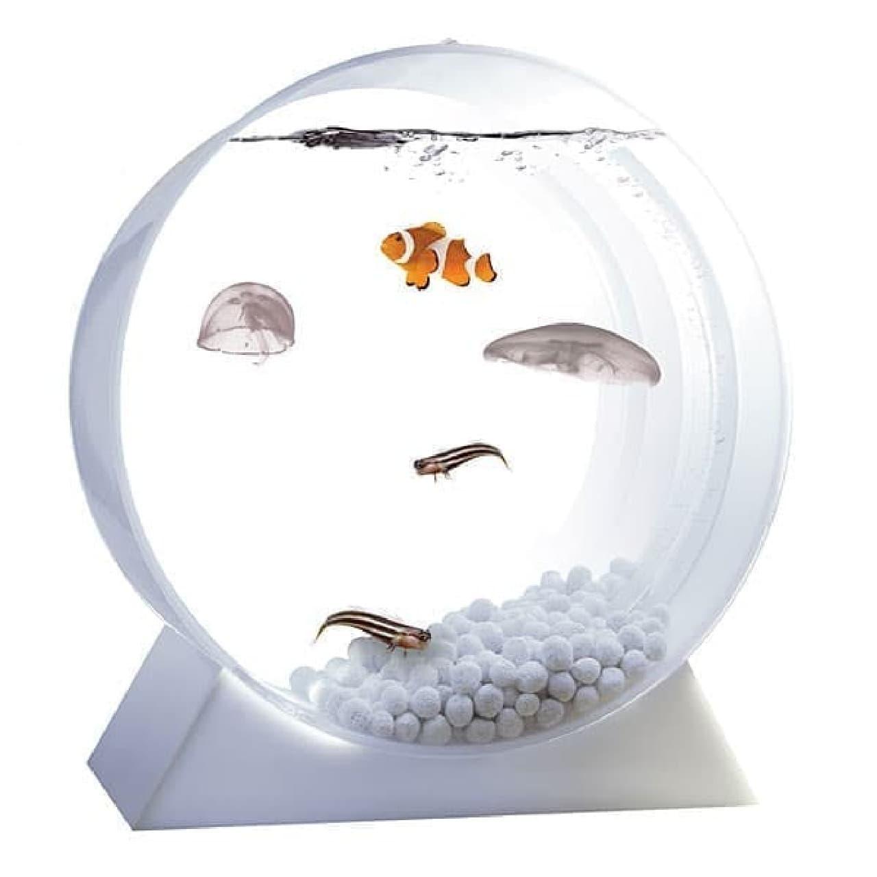 クラゲの他、熱帯魚も飼えるそうです