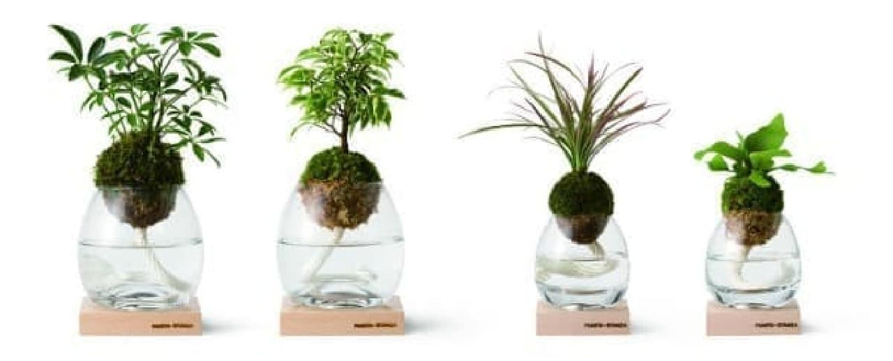 好みに合わせて観葉植物が選べる