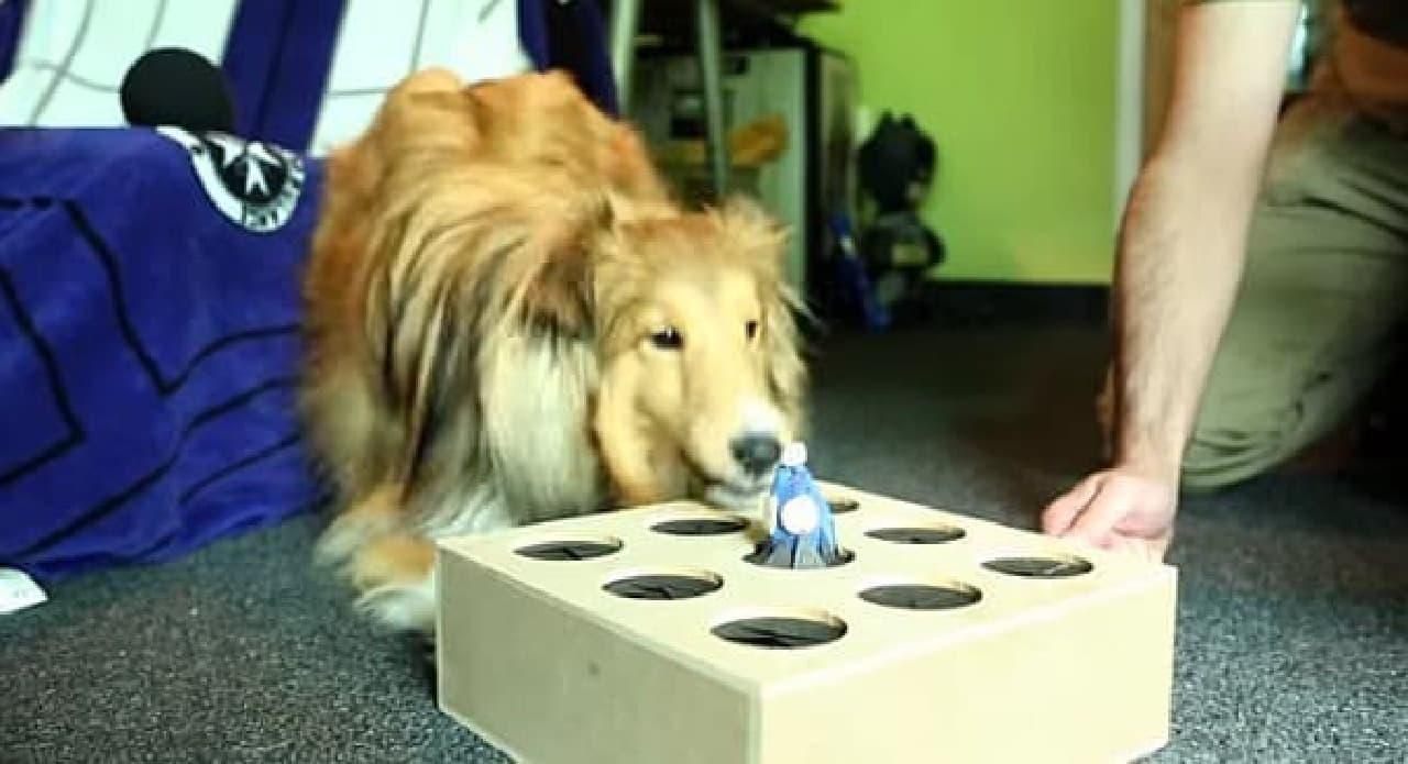 犬とも遊べます