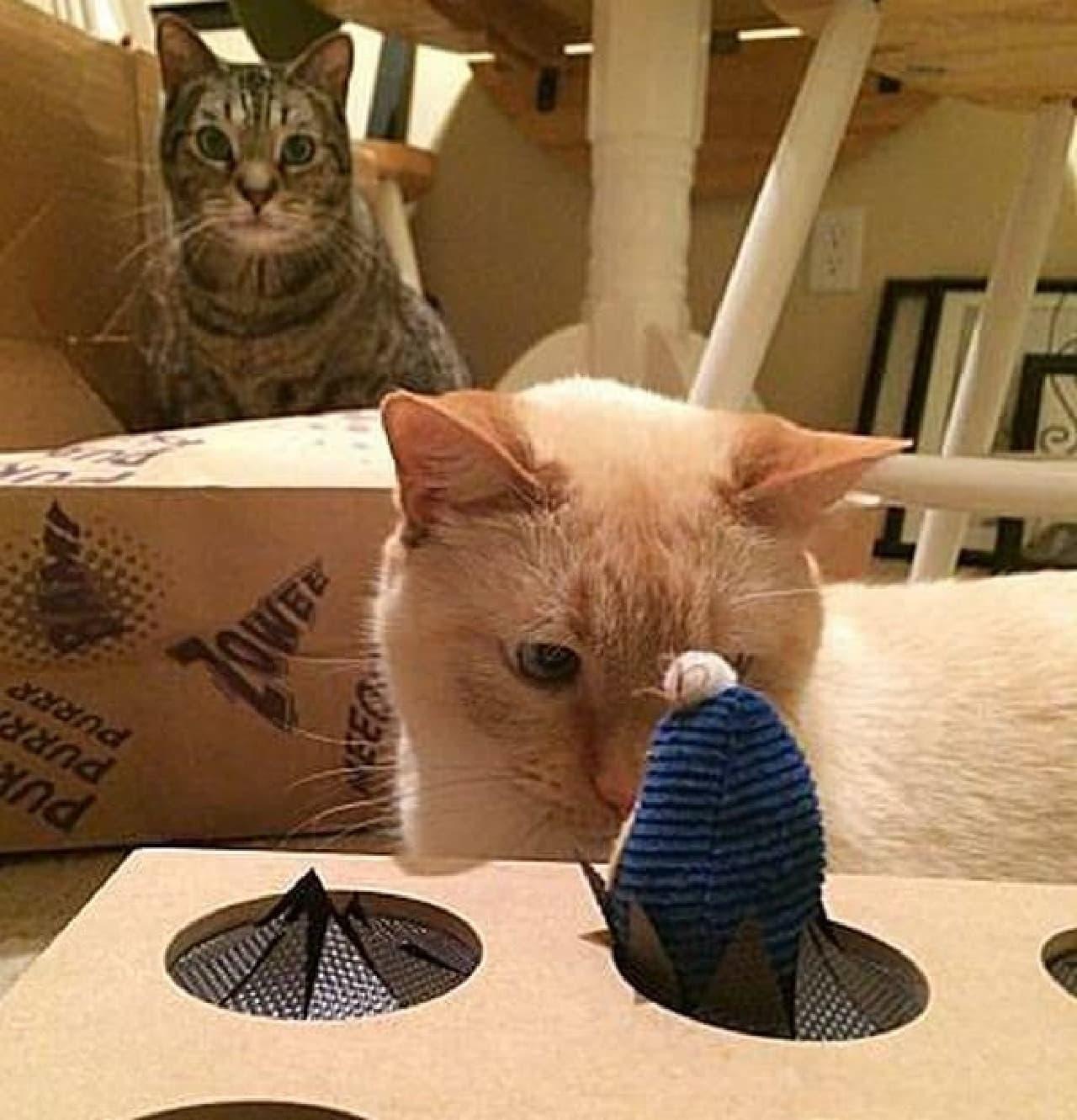 ネコとネズミの息詰まる戦いを楽しめます
