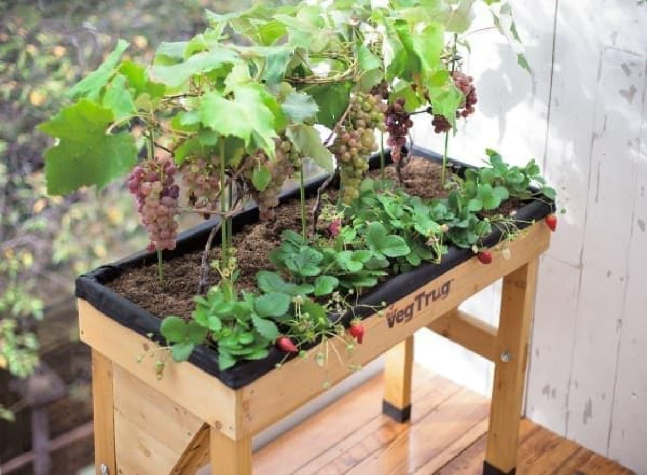 根の深い植物も同時に栽培できる