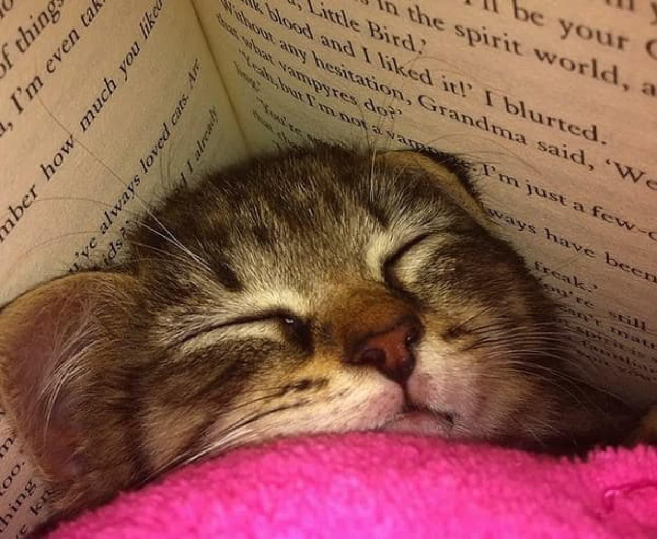 ねこ、満足  (画像は、満足して眠ってしまったネコのイメージです)