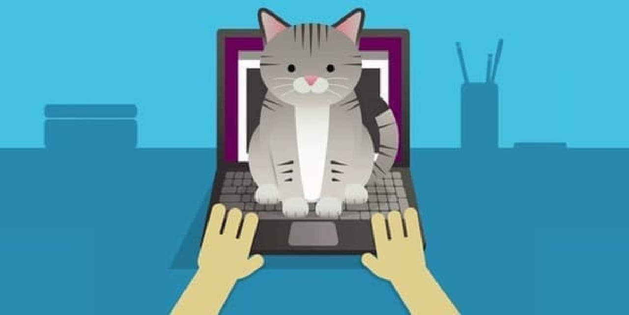 ネコは、できれば飼い主の邪魔をしたくない  ……本当か?本当にそうなのか??