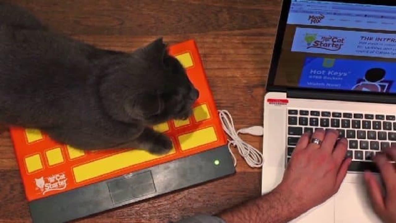 さて、今日もキーボードに乗るかな…