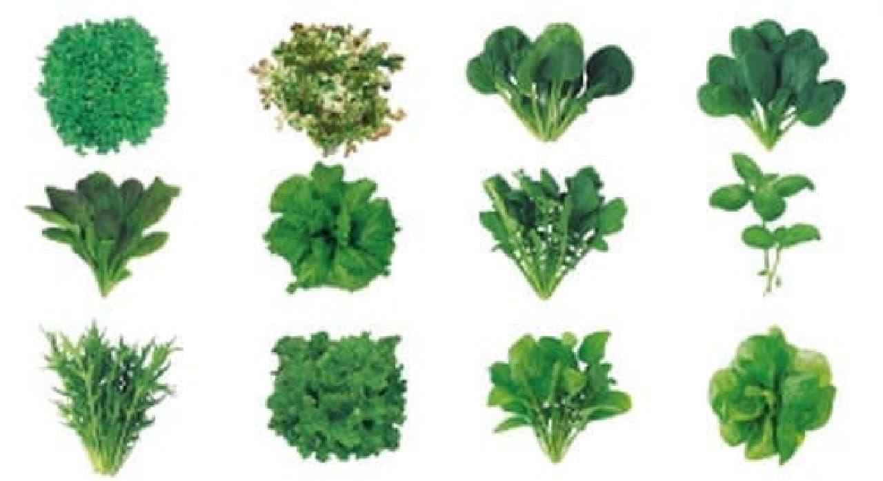 選べる野菜の種は全12種類