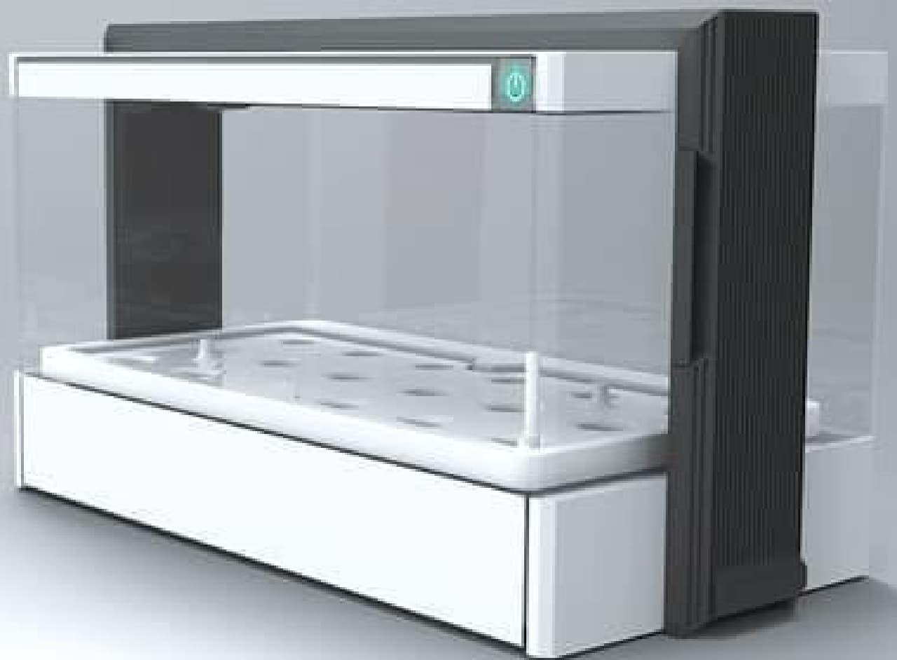 室温15~30度の室内で栽培可能
