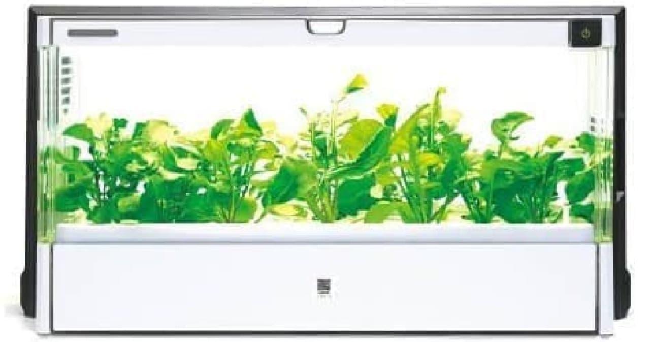一年中新鮮野菜が収穫できる