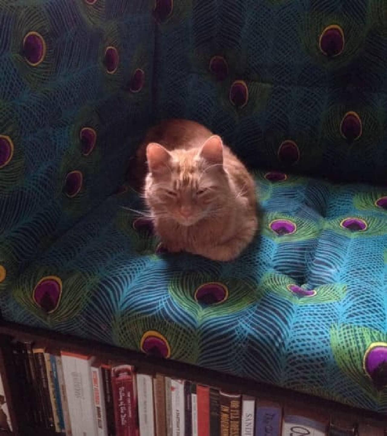 The Love Shack に展示された「The Library Chair」と、店の看板ネコさん