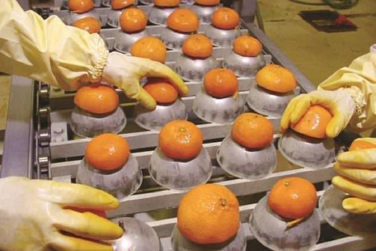 通常廃棄される果実の皮を有効活用