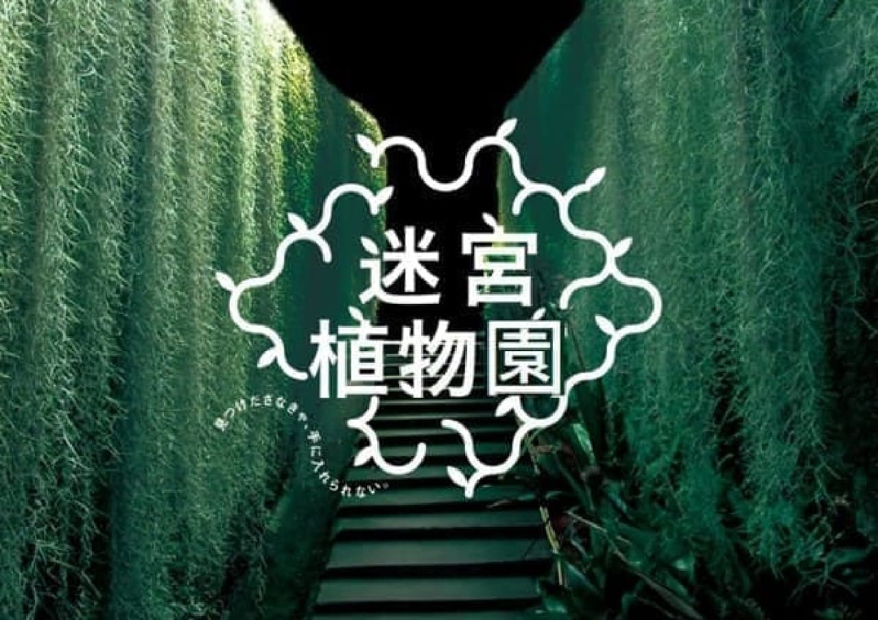 巨大迷路を進んで珍しい植物を手に入れろ!(画像はイメージ)