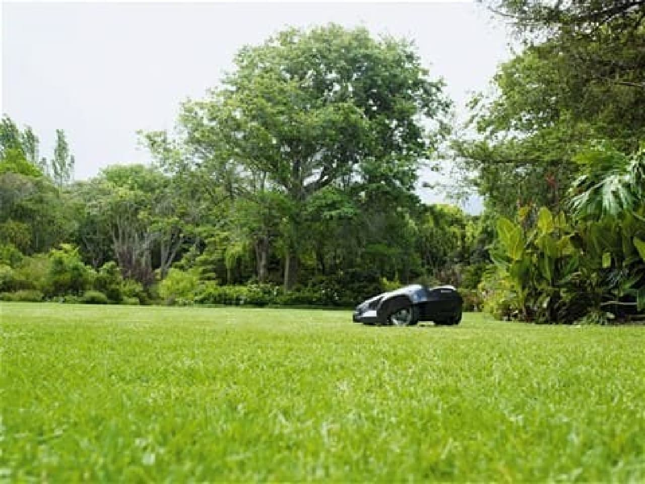 少しずつ、頻繁に刈ることで健康な芝生を育てる
