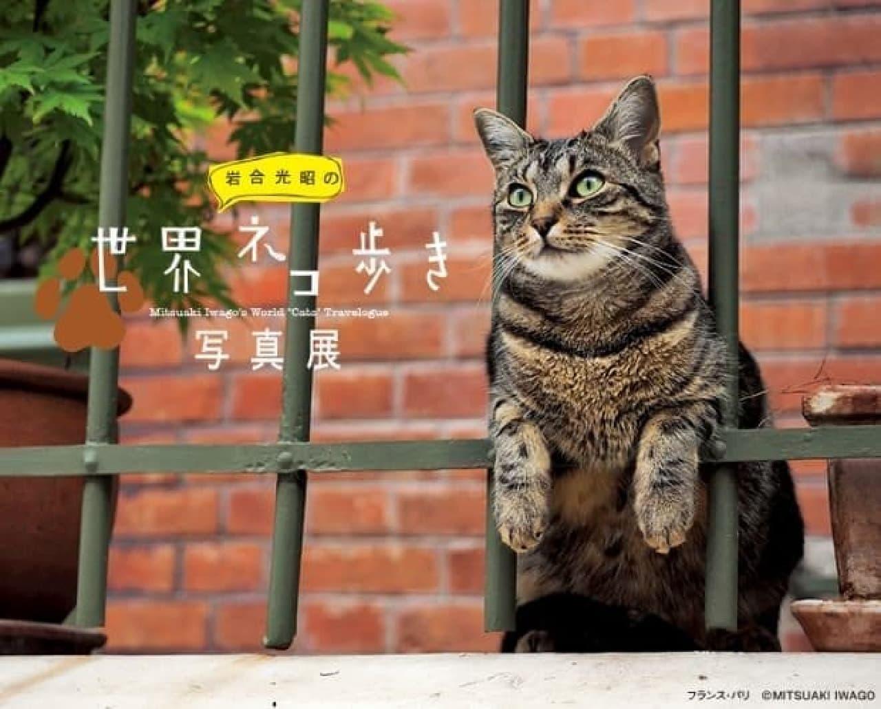 「岩合光昭の世界ネコ歩き」日本橋三越本店で開催中