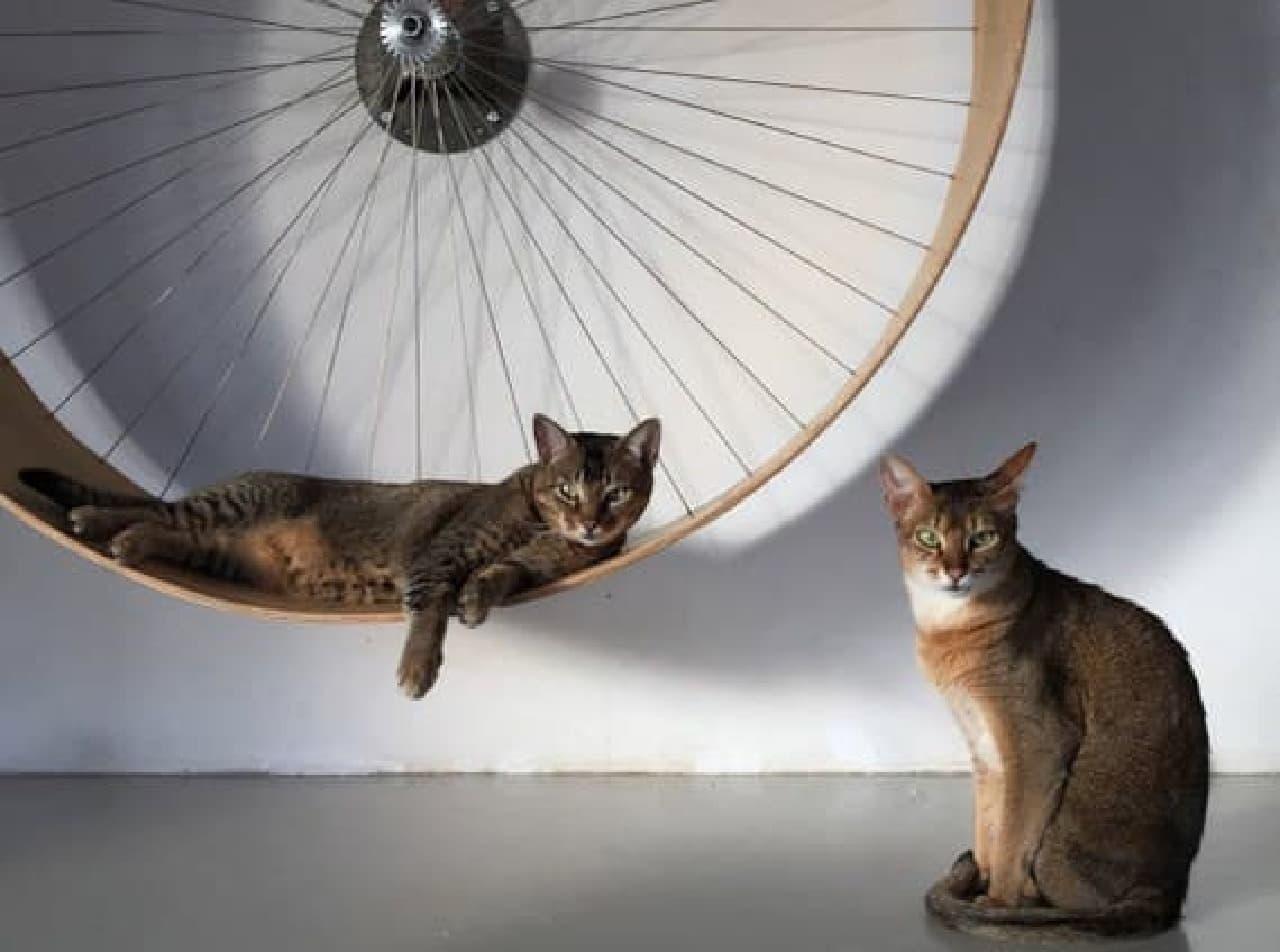 ネコ用のルームランナー「The cats wall's wheel」