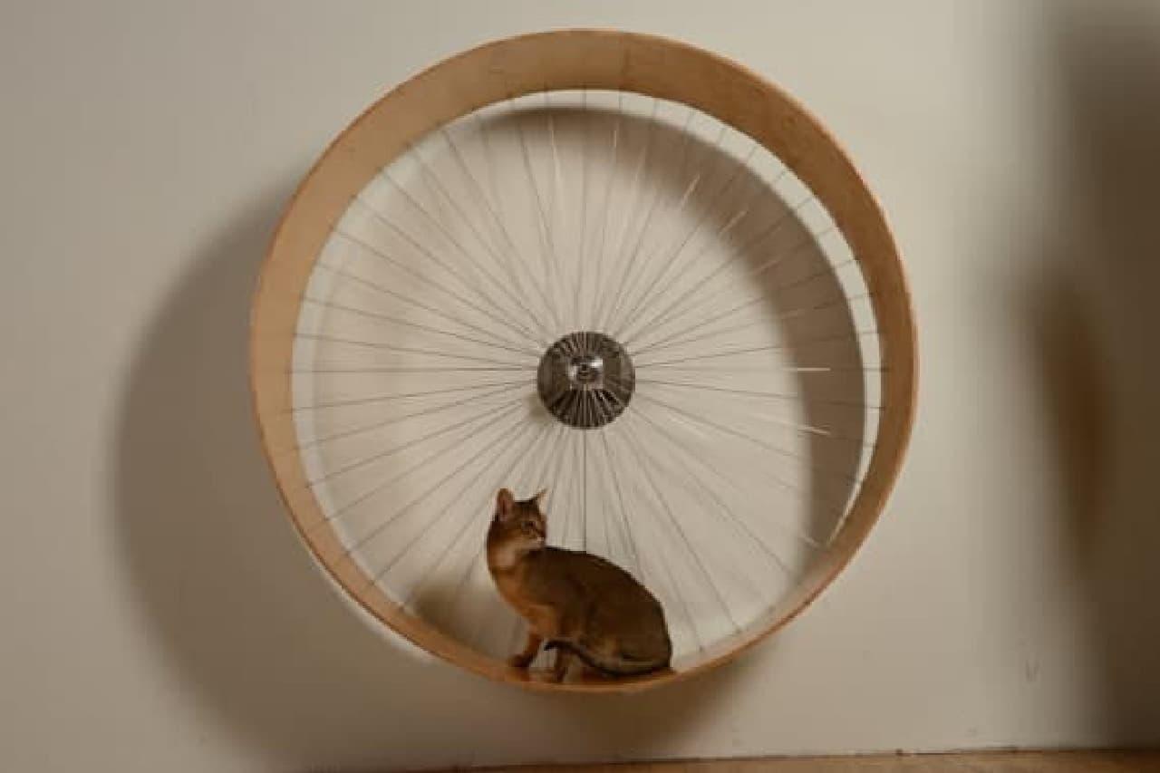 ネコがハムスター気分を楽しめる!
