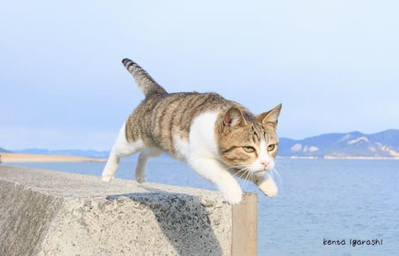 """""""飛び猫""""の五十嵐健太さんが主催"""