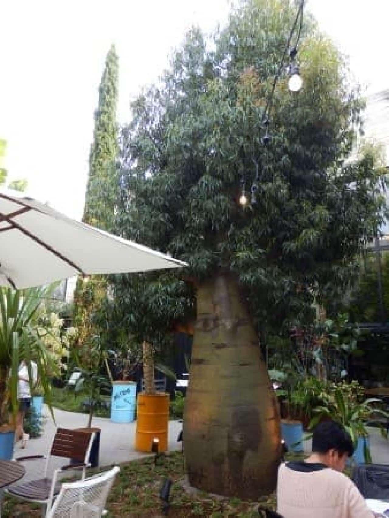 立派なボトルツリーは「代々木 VILLAGE」のシンボル