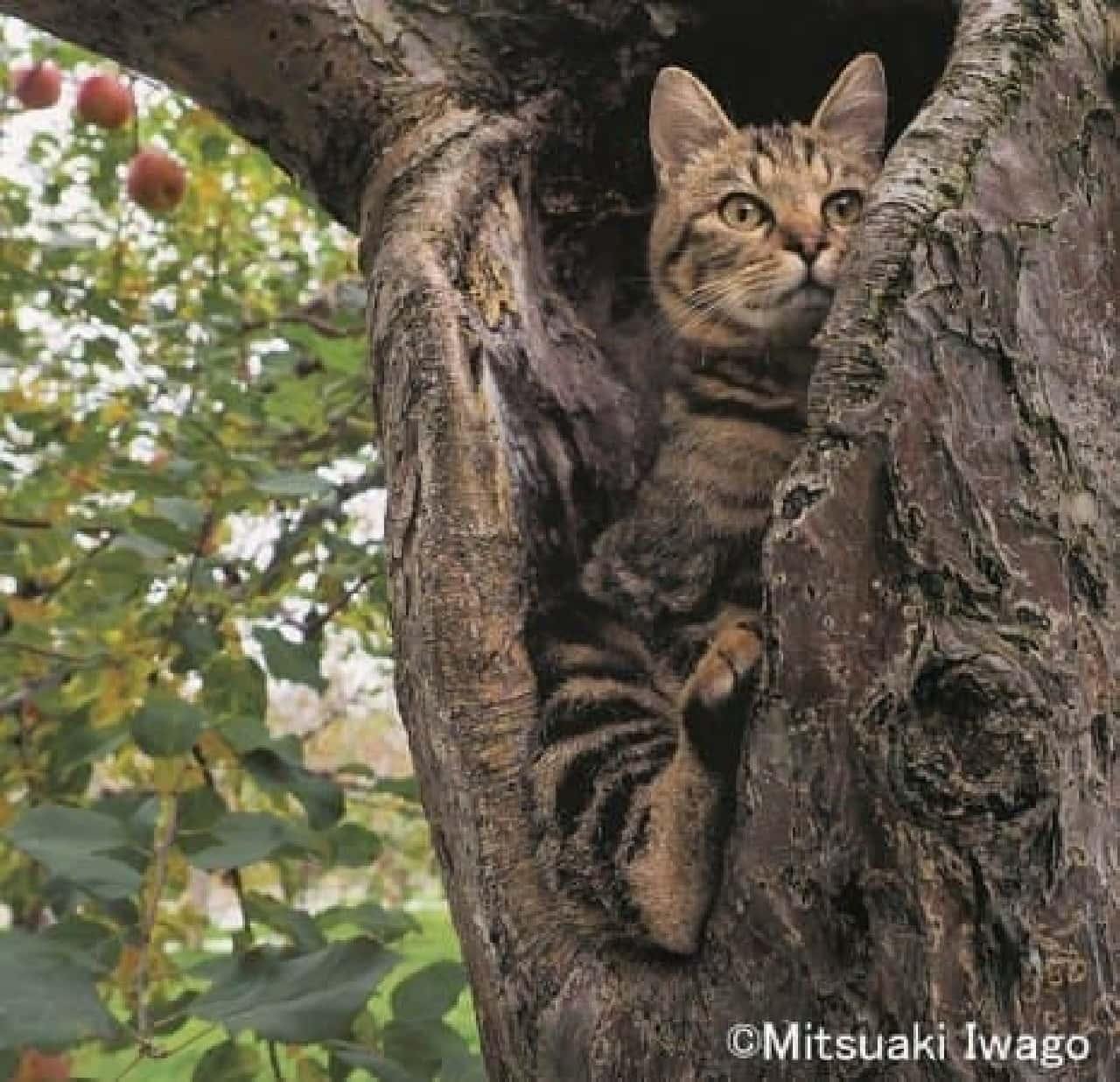 津軽の四季、子ネコたちの物語