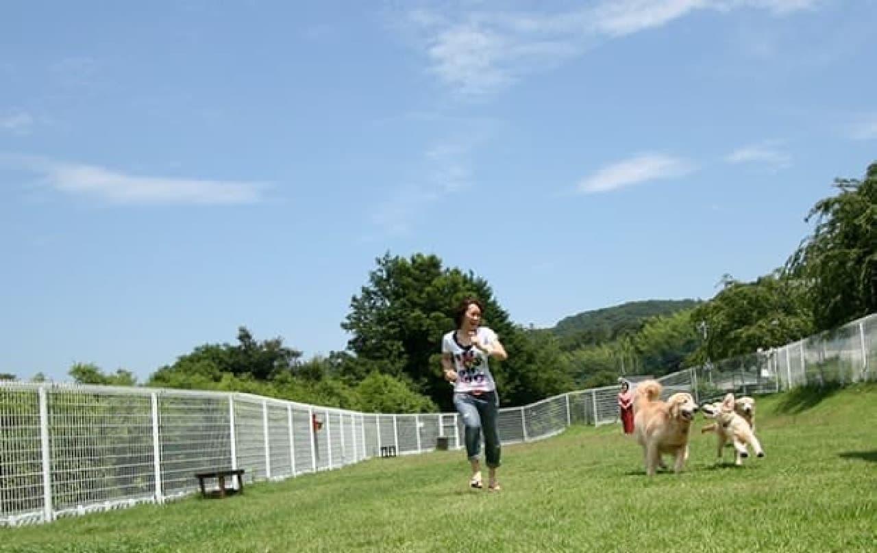 200坪の天然芝ドッグランを完備