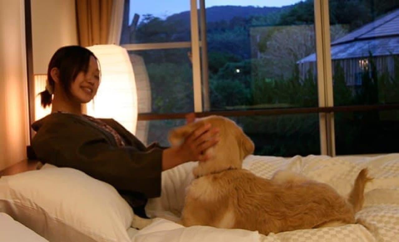 寝る時も、ワンコと一緒!