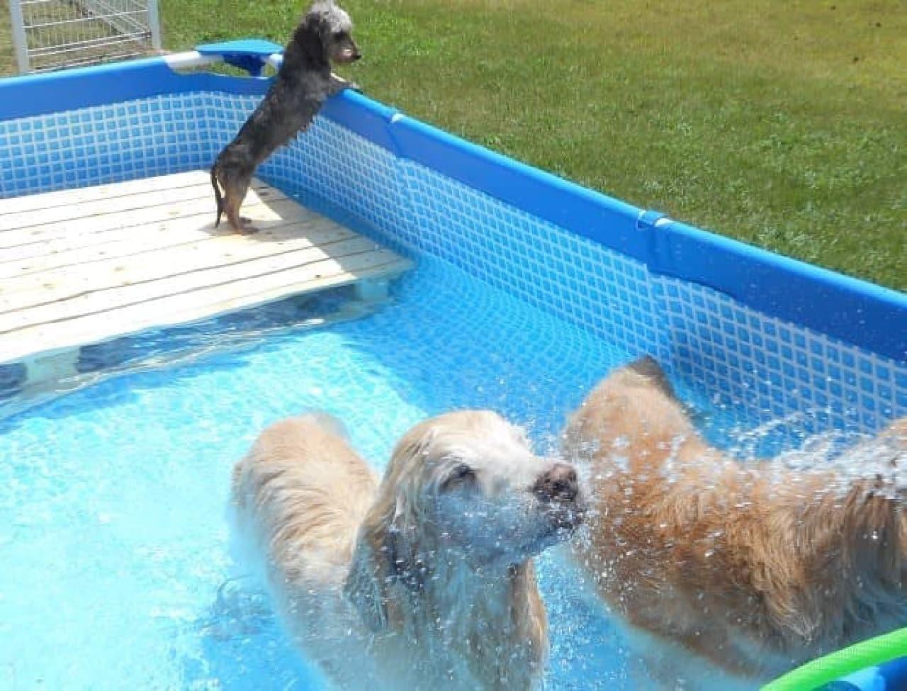 「伊豆修善寺 絆-きずな-」で、ワンコ専用「温泉プール」の提供開始