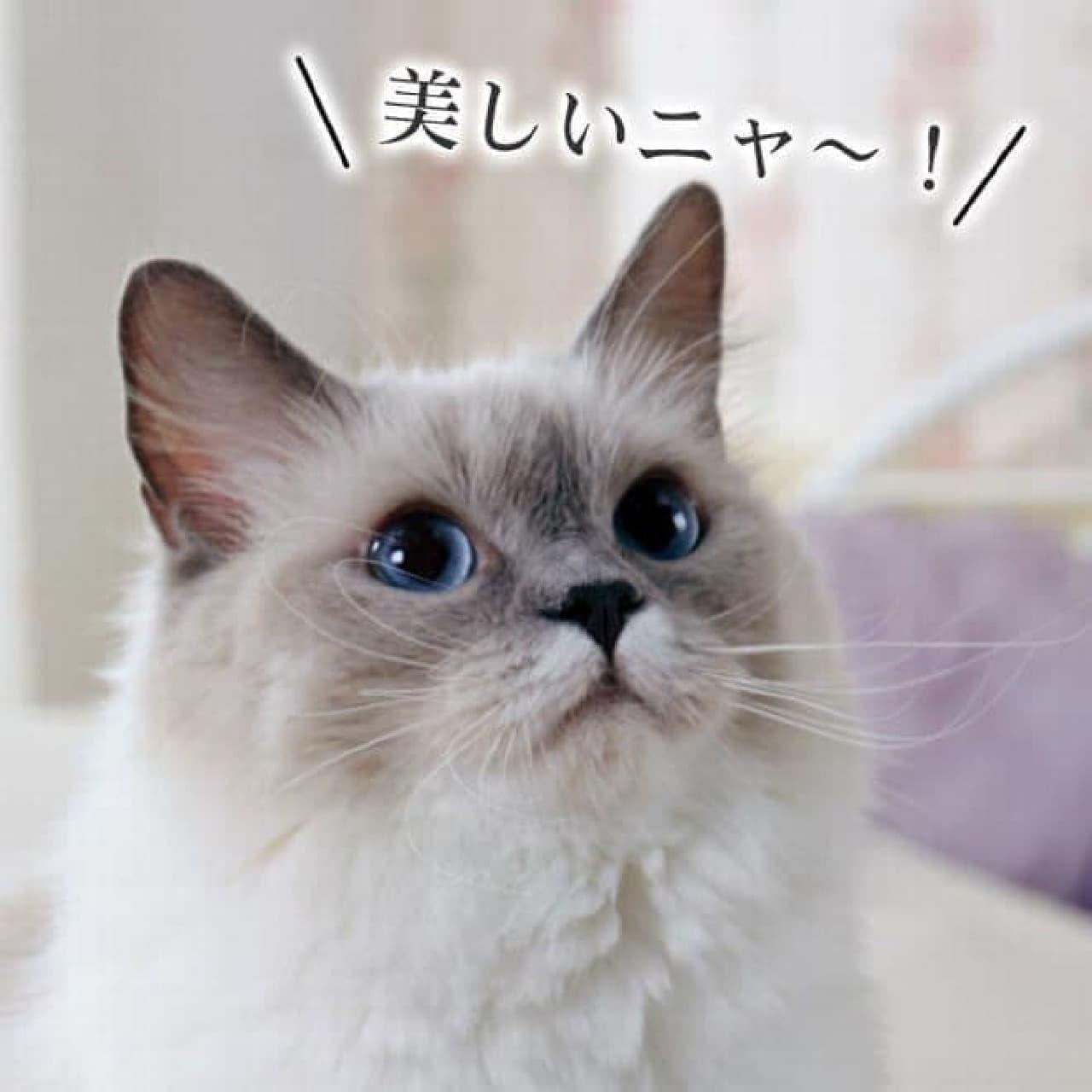 違いがわかる、ネコ向けのタワー(?)