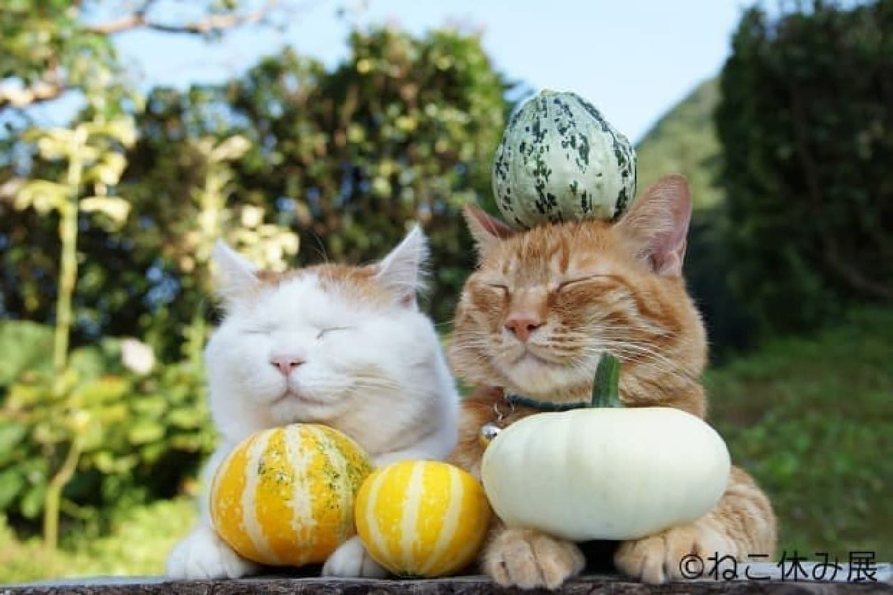 かわいい猫写真を
