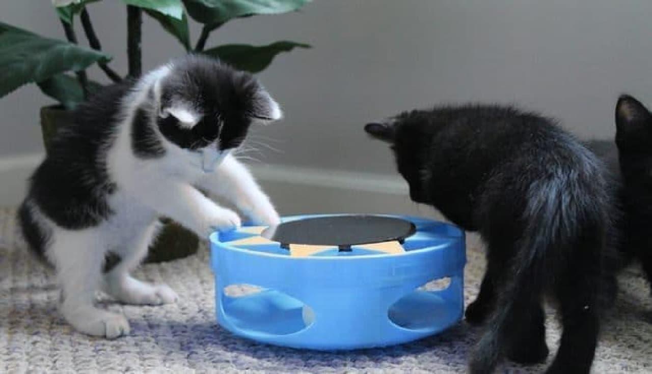 「これは何かニャ?」  (インターンの子ネコたちによる製品テスト風景)