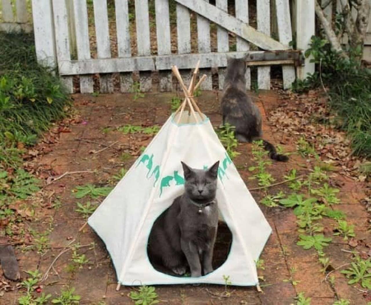 庭は風通しが良いのだにゃ