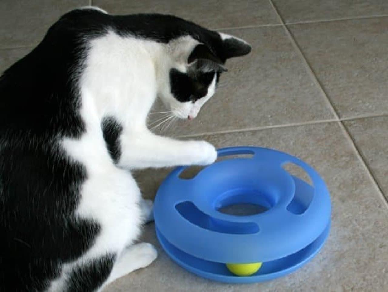 参考画像:米国で人気のネコのおもちゃ「クレージーサークル」