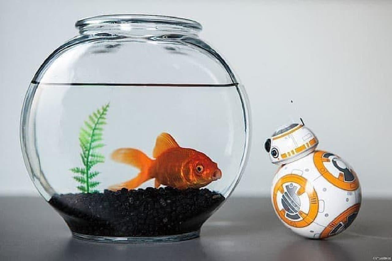 ローリングロボット「BB-8」のミニチュアトイ  カワイイだけが取り柄です  まぁ、それで十分と言えば十分なんですが…