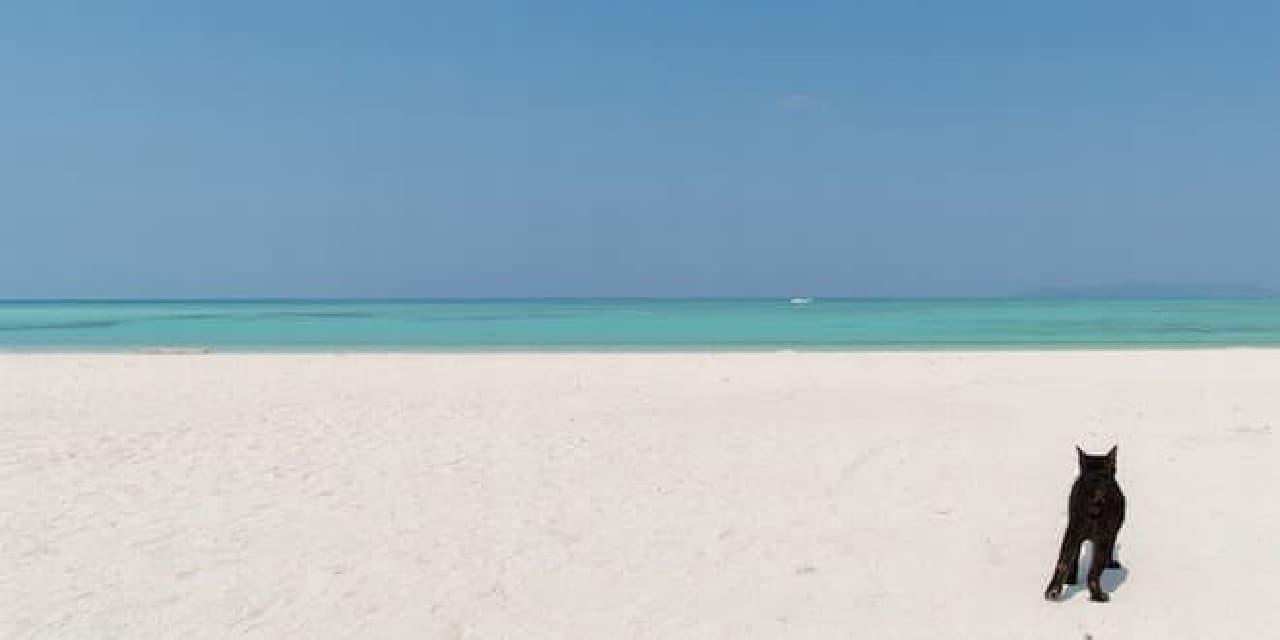 青い空と白い砂浜も、この写真集の魅力