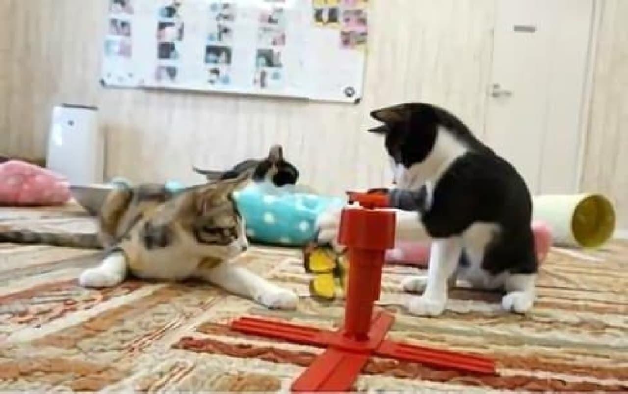 のんびり過ごす仔猫たち