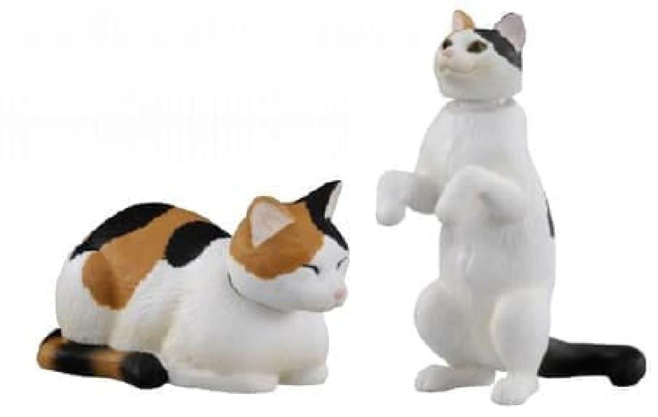 「三毛猫」
