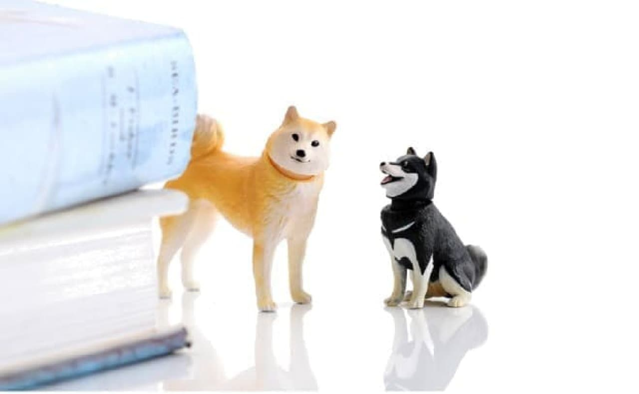 「柴犬&豆柴」  あれ?「ミニチュアダックスフンド&トイプードル」は?