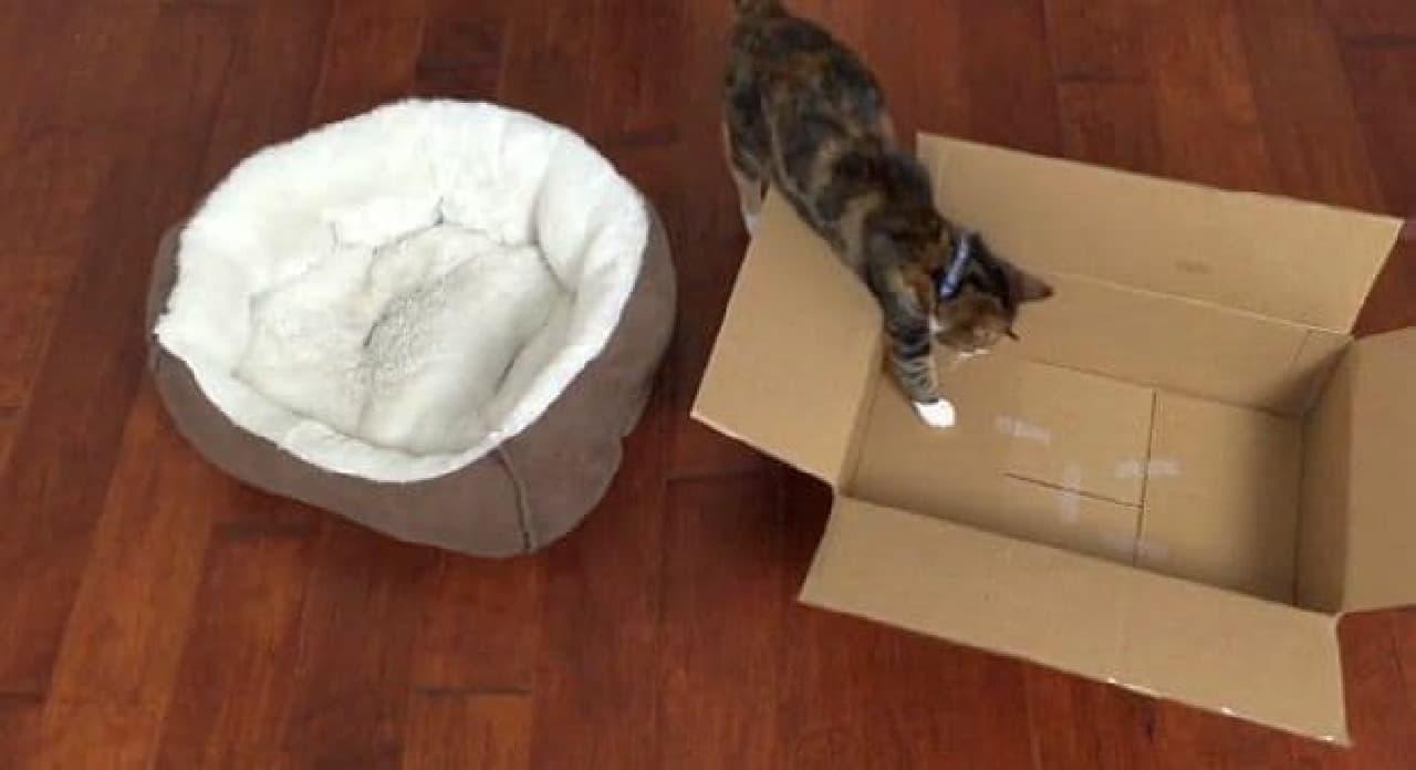 だがネコは新品のベッドではなく、  汚れた梱包用のダンボールを選んだ