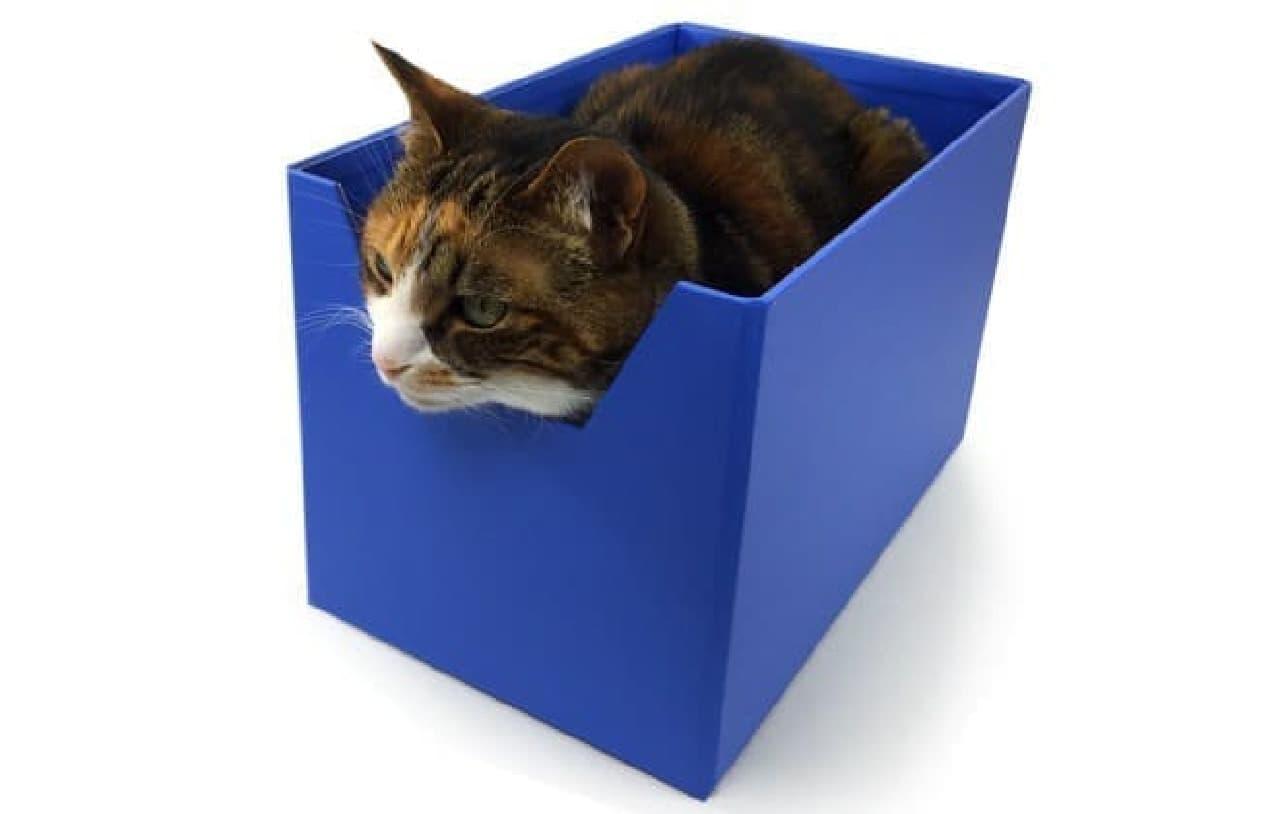 ネコのための究極のキャットベッド「Boxy Bed」