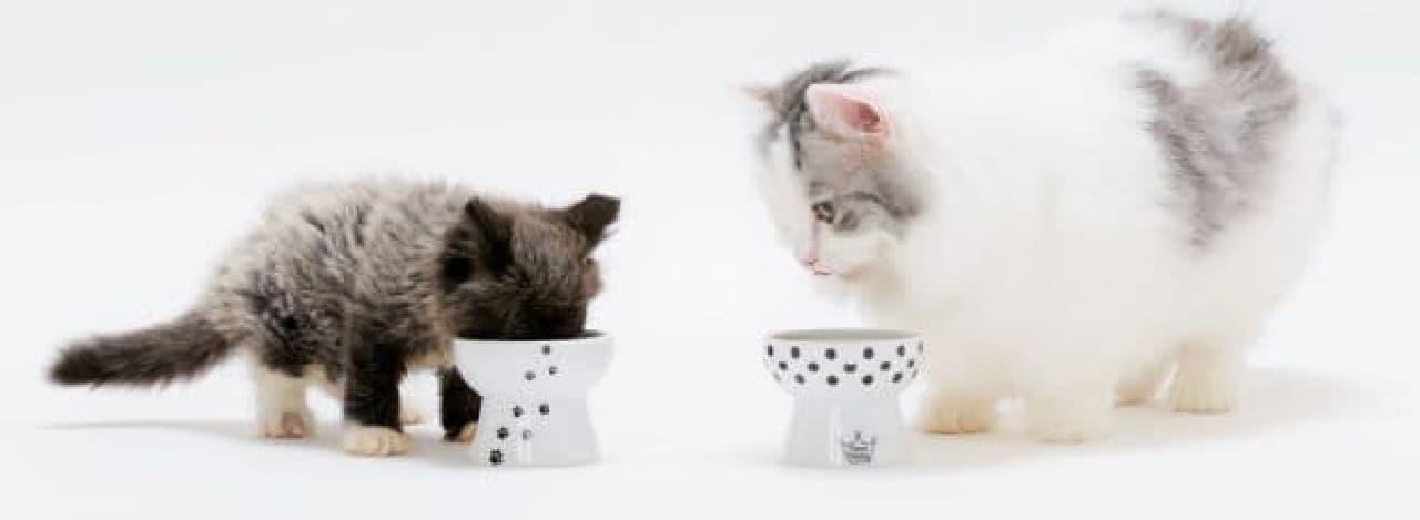 猫のお皿にこだわる時代到来