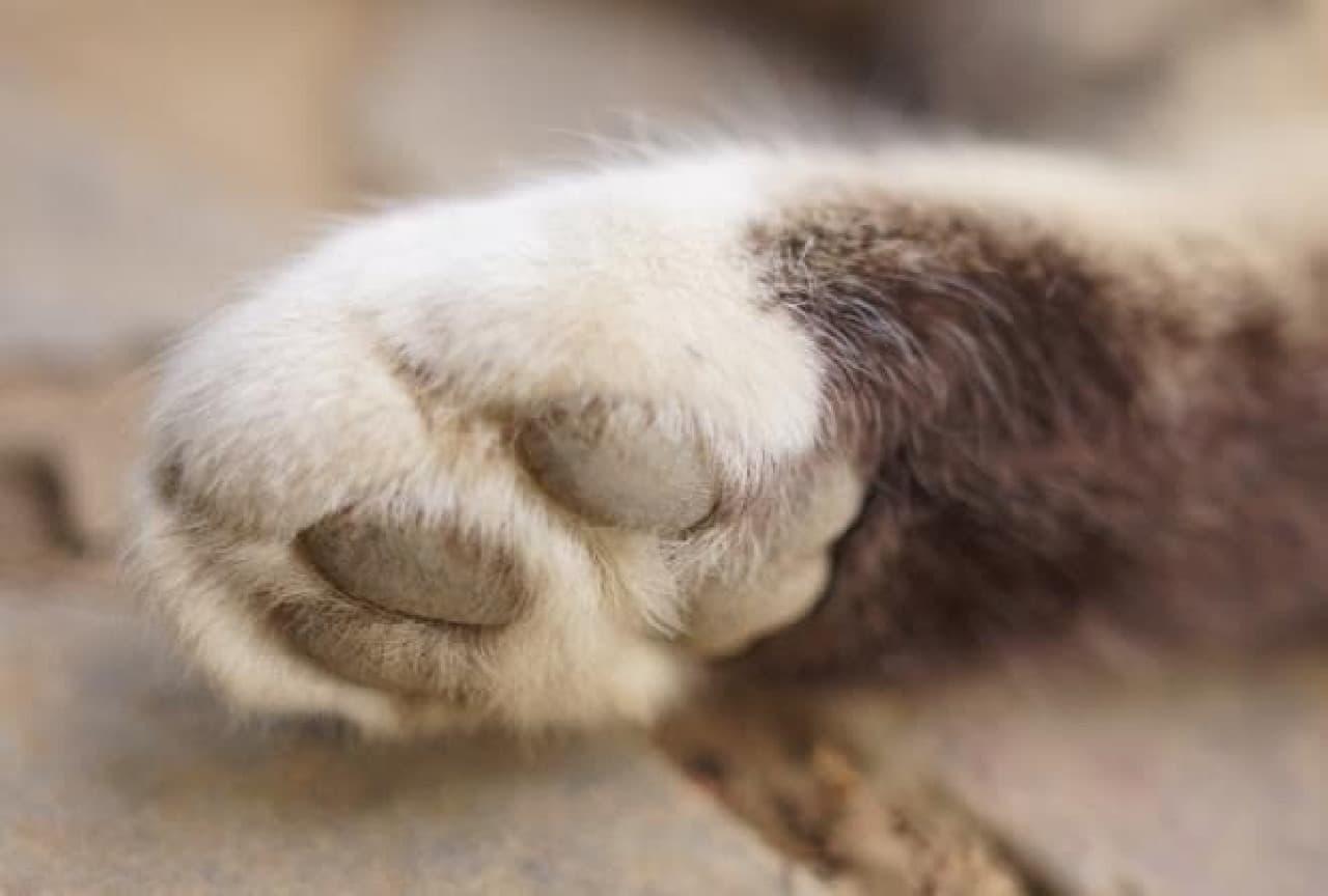 汗腺がある肉球は、猫にとっても大事なパーツ
