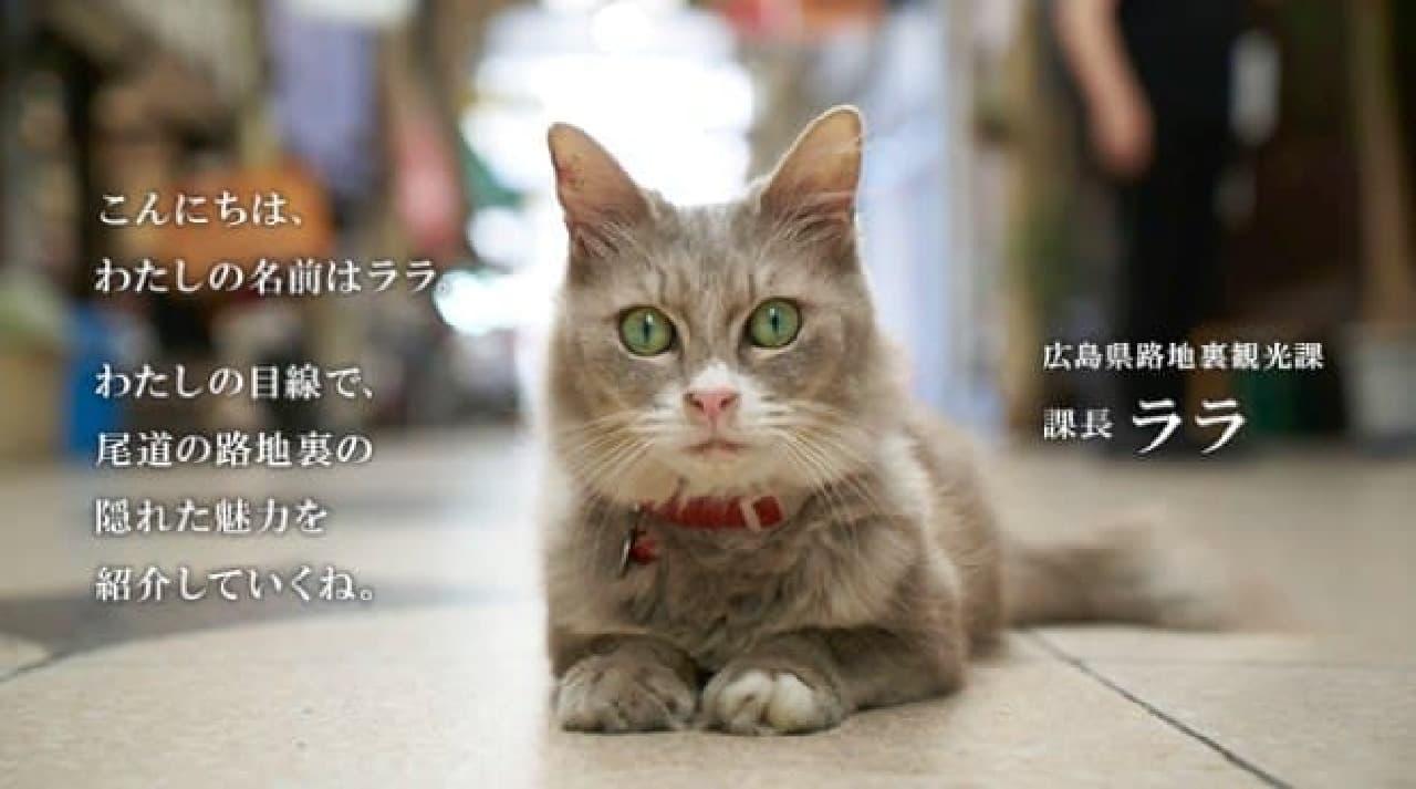 案内ネコのララさん  広島県路地裏観光課の課長