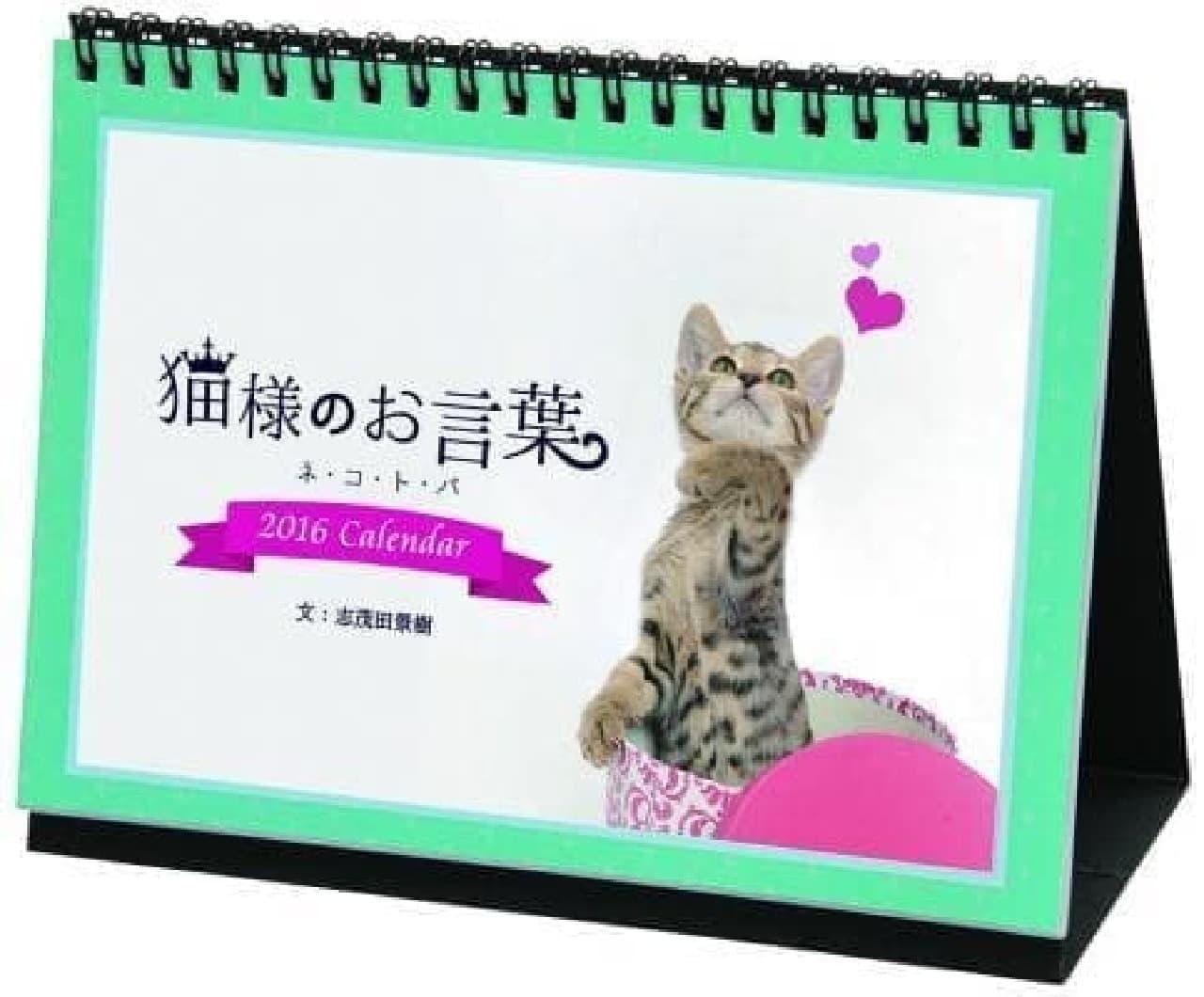 オフィスや家庭で愛らしいネコたちに癒されよう!