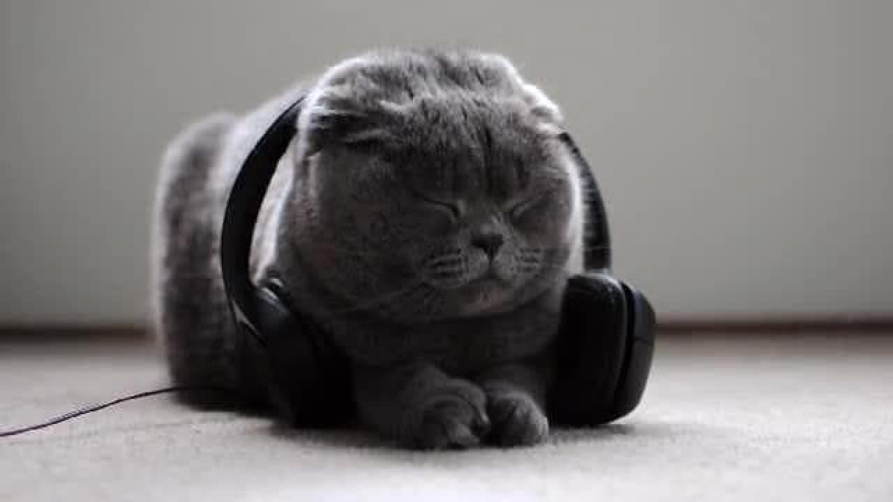ネコのミュージックライフを豊かにするプロジェクト「Music for Cats」