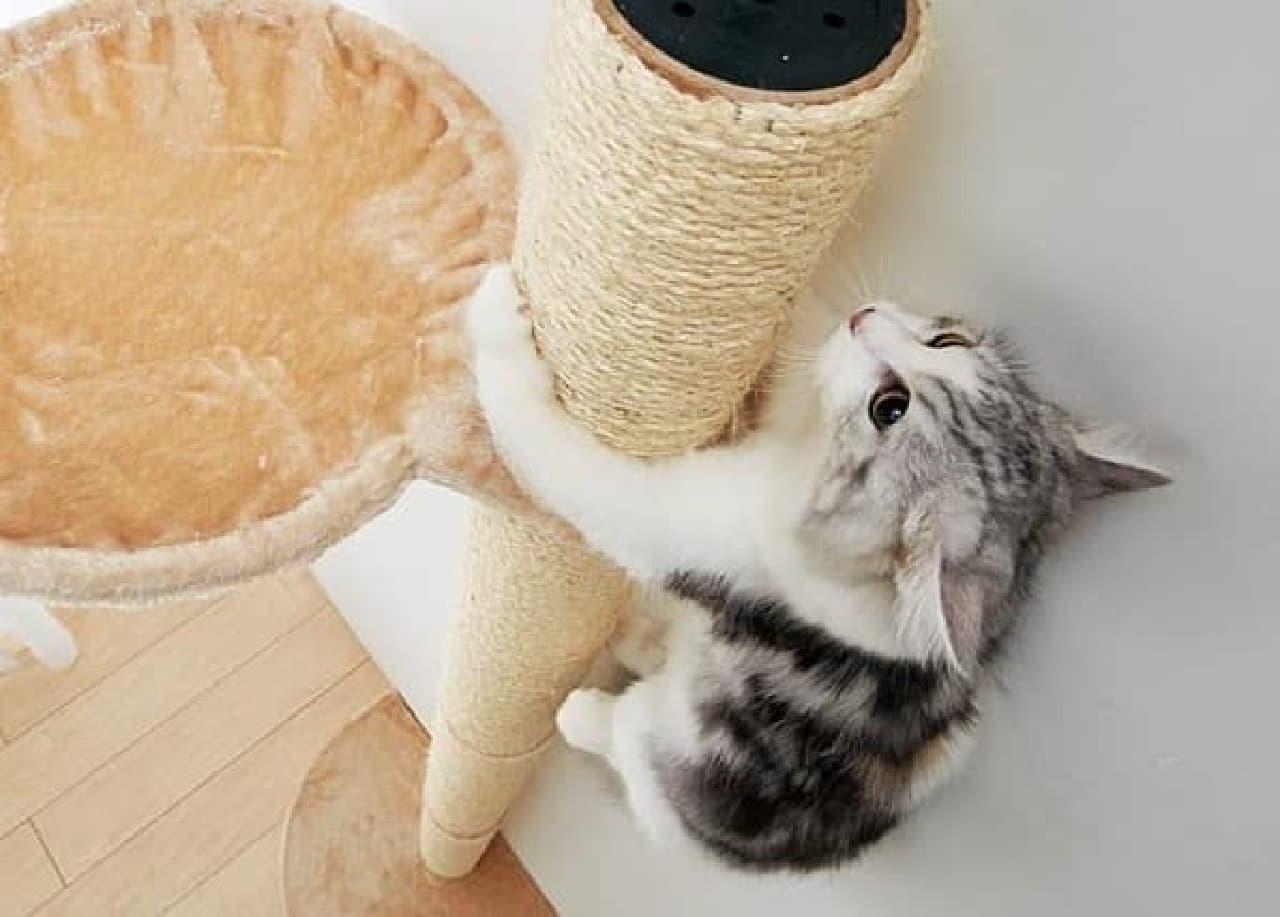 ネコは登るよ、どこまでも!  木登り用キャットタワー「おうちで木登りタワー」