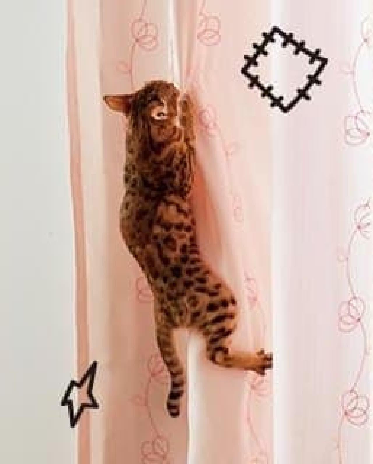 もうカーテンには登らにゃい