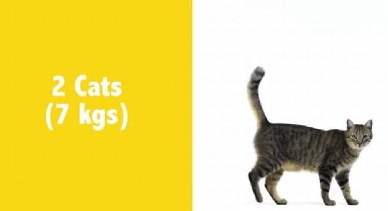 ネコなら2匹分でしかない