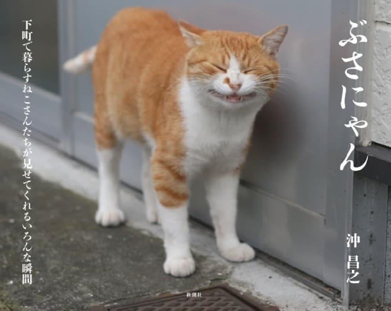 """""""ネコ能力者""""(?)沖昌之さんの写真集「ぶさにゃん」"""