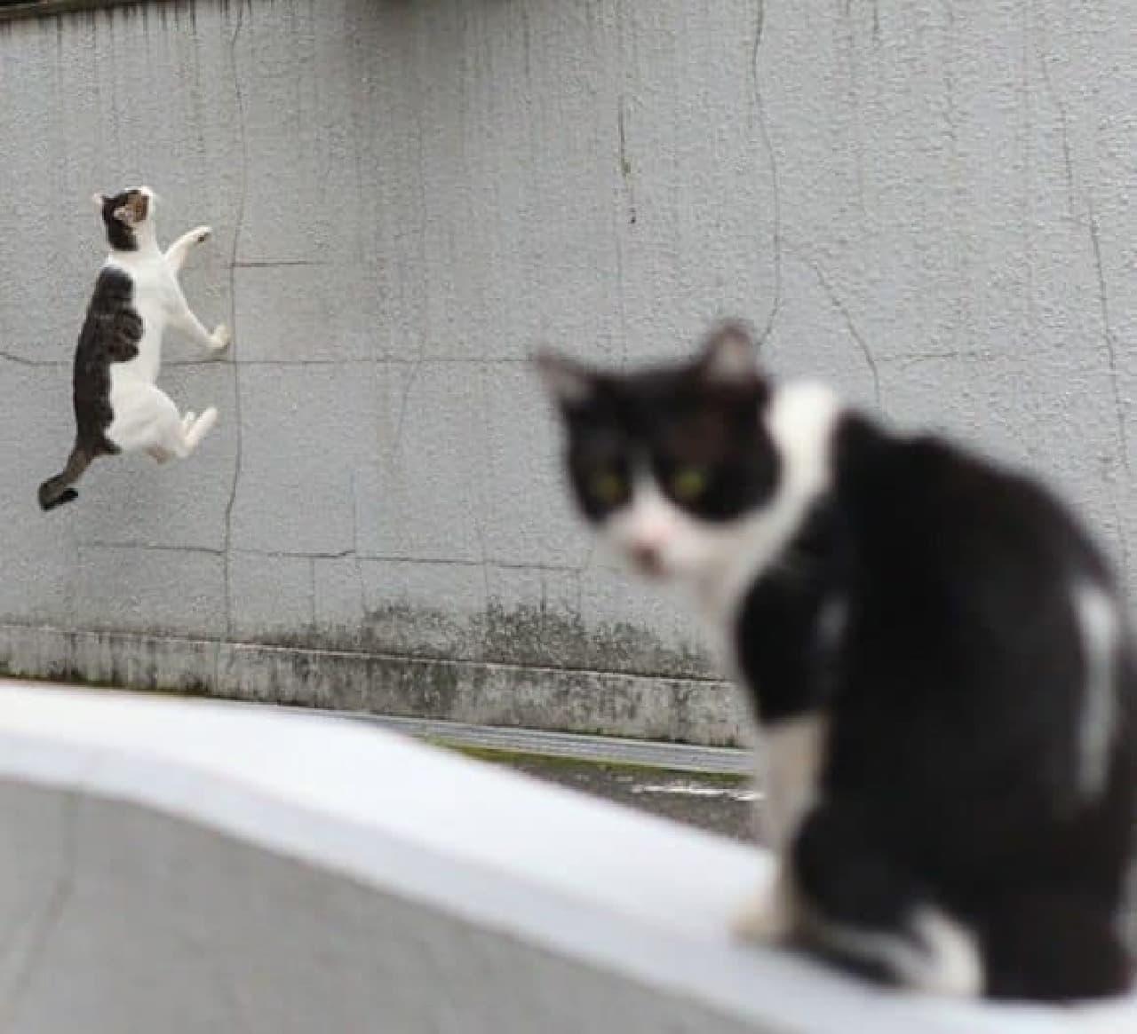奇跡の一枚の例:壁を歩くネコ
