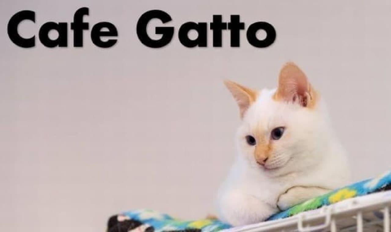 ネコカフェと古民家カフェを合体させた新しいスタイルのカフェ「Cafe Gatto」