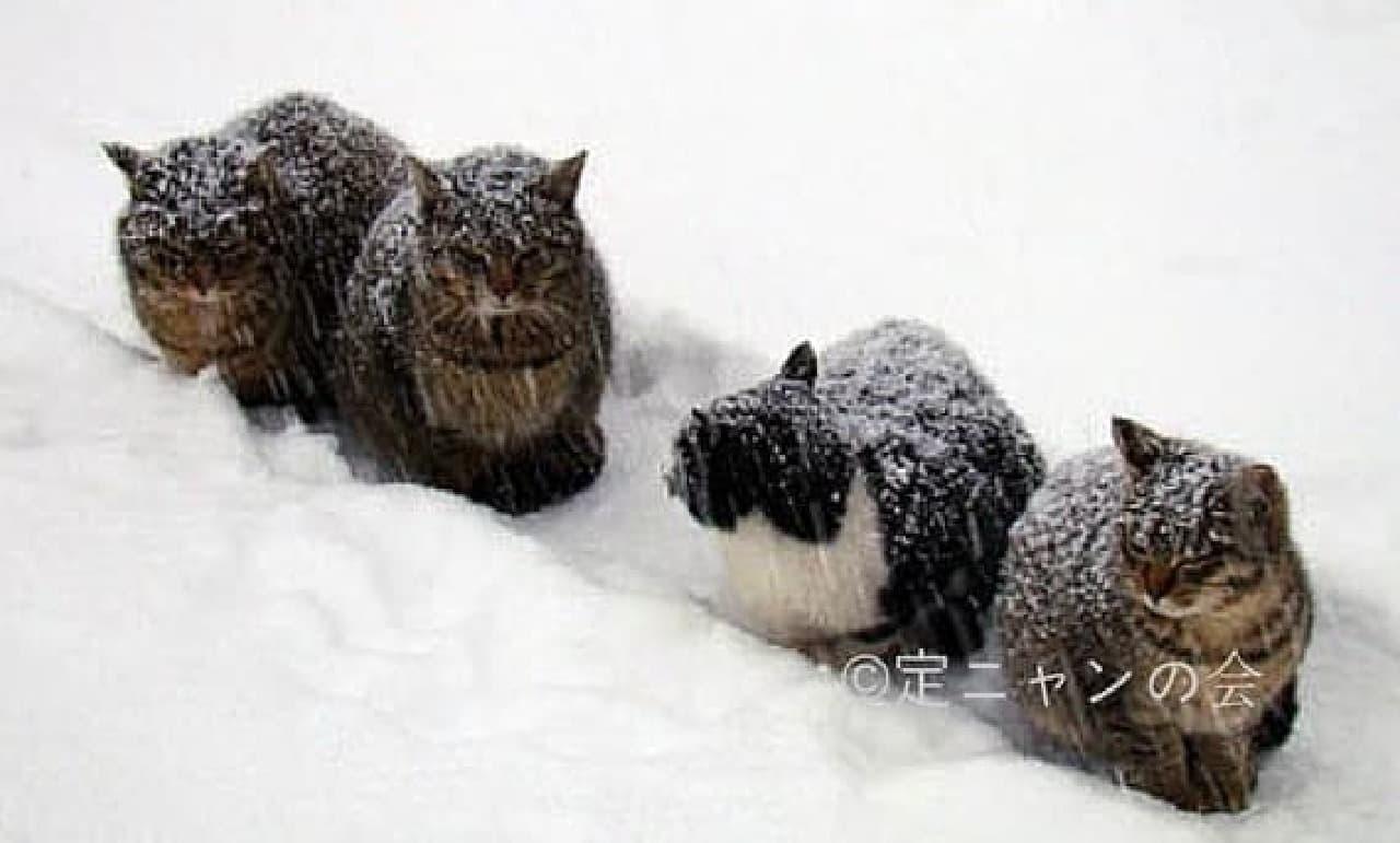 札幌市南区定山渓の野良猫  (写真提供:定ニャンの会)