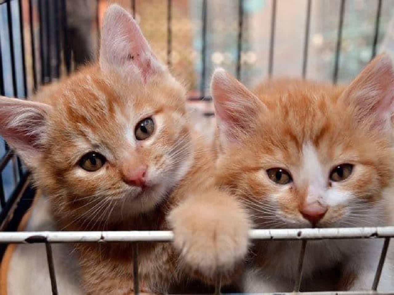 保護猫用施設の建設に向けたプロジェクトスタート