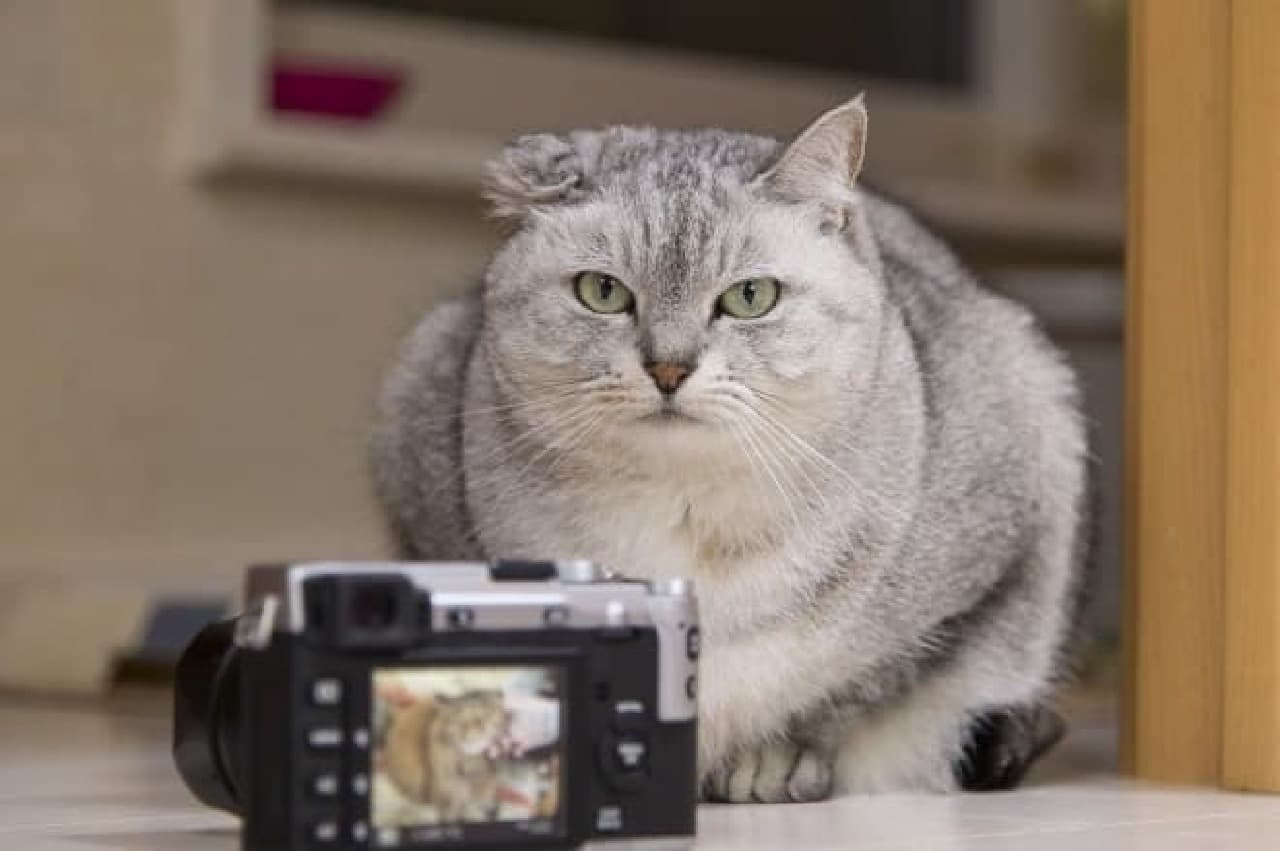 ネコ写真教室  これは参加してみたいなぁ…。